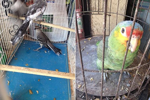 Decomisa Profepa 16 aves en Acatlán de Osorio