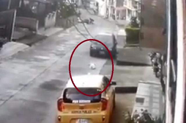 Perrito callejero entra por error a casa y lo avientan de segundo piso