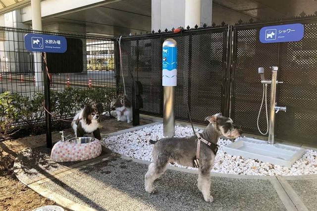 Aeropuerto de Japón abre baño exclusivo para perritos viajeros