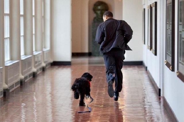 Con emotivo mensaje, Barack Obama se despide de su perro Bo
