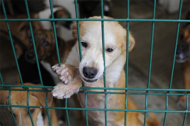 Valoran presentar amparos contra la Ley de Bienestar Animal