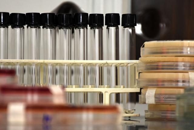 Investigación BUAP halla bacterias que viven de contaminantes industriales