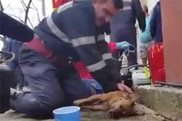 Un bombero rumano resucita a un perro y ahora es héroe nacional