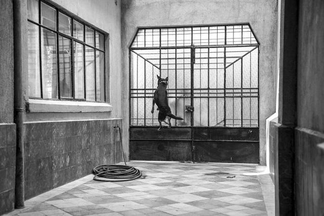 El Borras, el perro callejero que se convirtió en estrella de cine gracias a Roma
