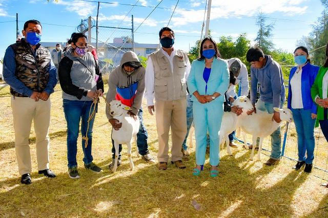 Entrega Lupita Daniel 300 cabezas de ganado ovino en Cuautlancingo