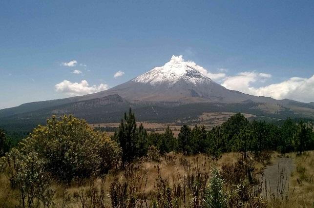 En recuperación zona boscosa del centro de México