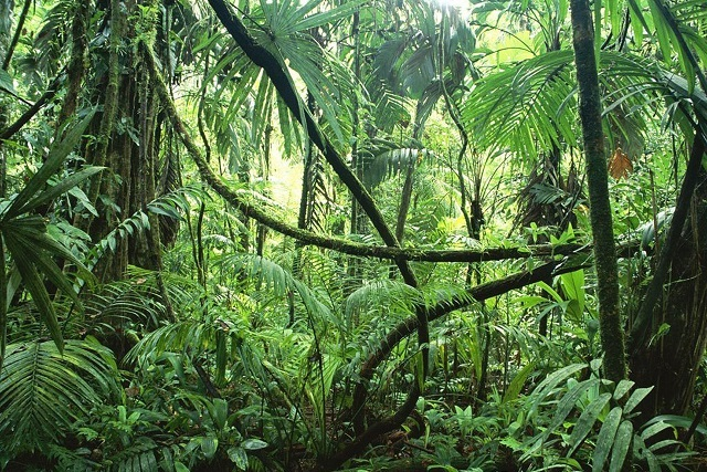 ¿Sabes qué son y la importancia de los bosques tropicales?