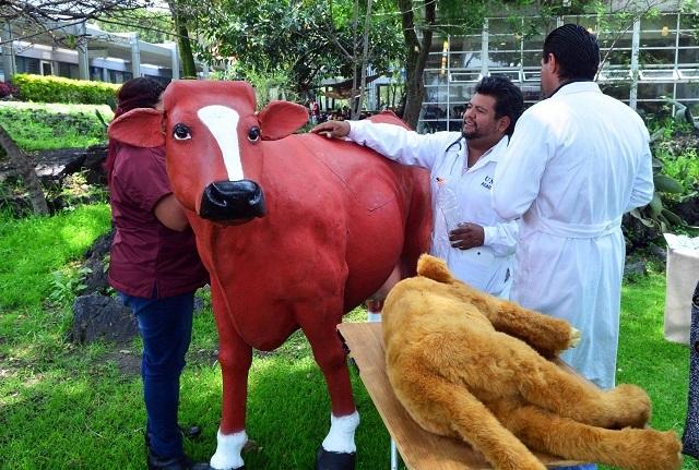 Con simuladores para atención a bovinos enseñan a estudiantes