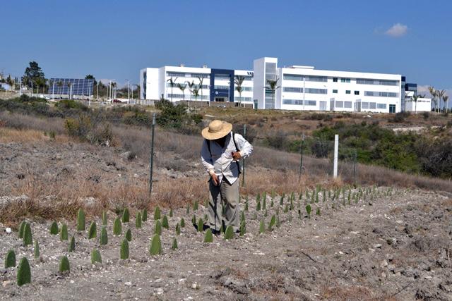 Reconocimiento internacional a BUAP por prácticas de sostenibilidad