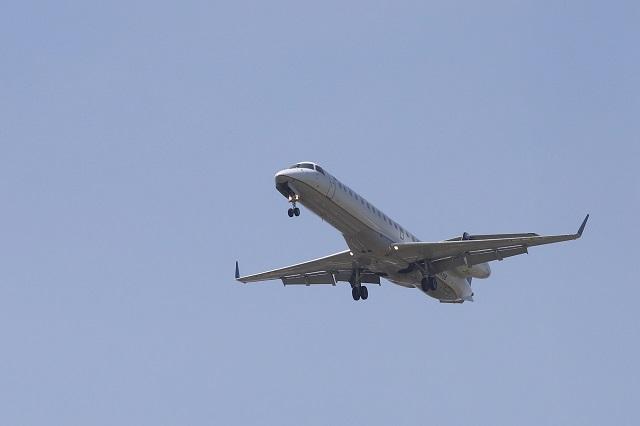 Buitre choca con avión y queda prensado en parte delantera
