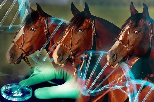 Clonación de caballos no sustituye reproducción natural