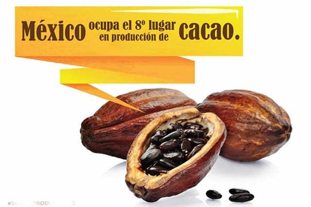 Cacao, riqueza ancestral, sabor y cultura