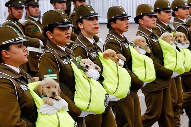 Cachorros carabineros se roban la atención de un desfile en Chile