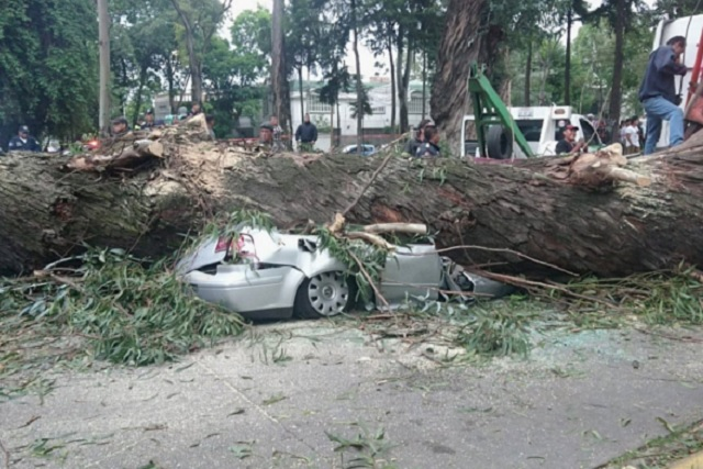 Árbol cae sobre un auto en Naucalpan y mata a 4 personas
