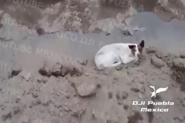 Creen que perro sigue en socavón y que lo buscaron en el lugar equivocado