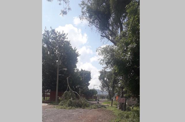 Por lluvias continúa caída de árboles en Atlixco