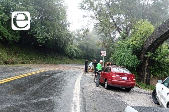 Se caen árboles en carretera por lluvias en Huauchinango