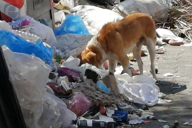 Calles de Tehuacán se desbordan de basura, van seis días