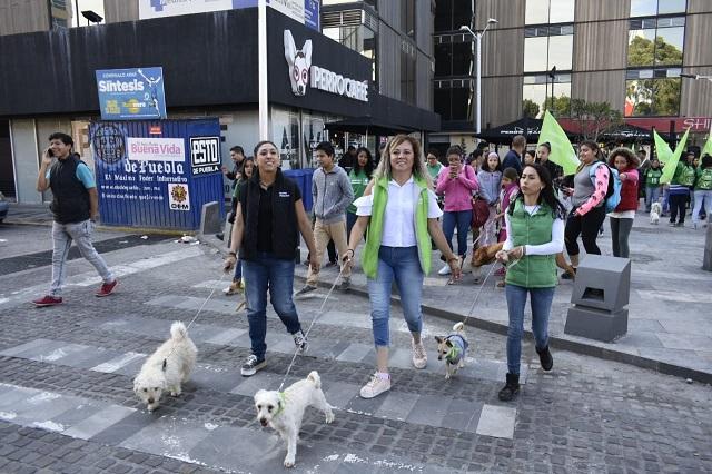Encabeza Partido Verde caminata con animales en Puebla