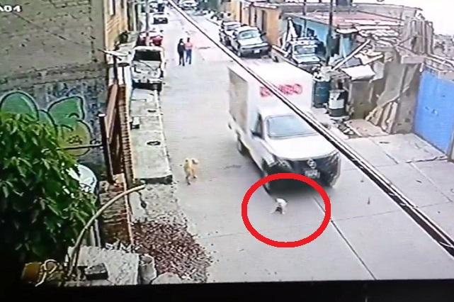Video: Chofer de Bimbo atropella a un perro y causa indignación