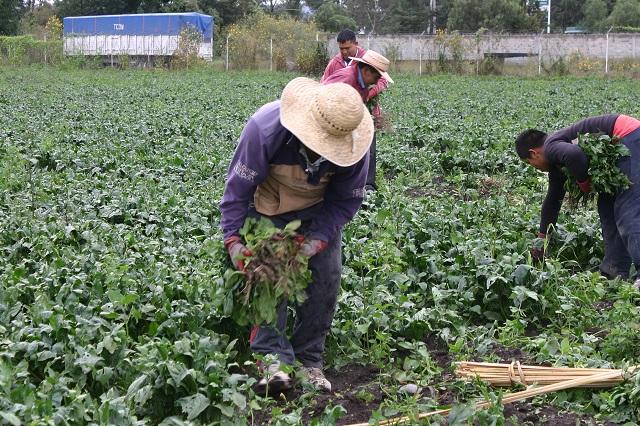 Logran campesinos poblanos alta calificación por labor en Canadá