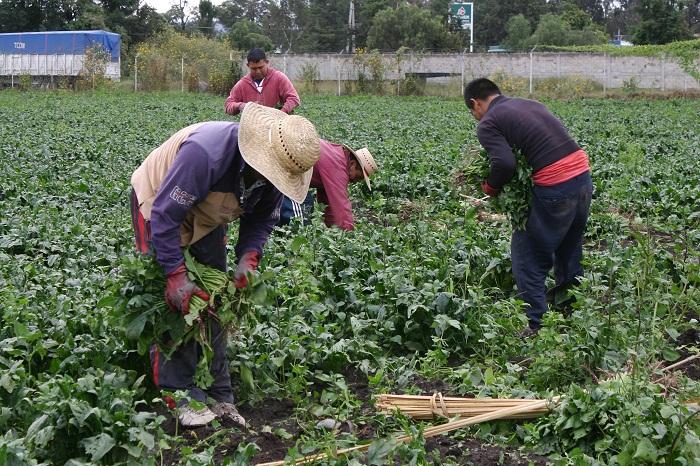 Apoyará gobierno a los sectores ganadero y acuícola en Puebla