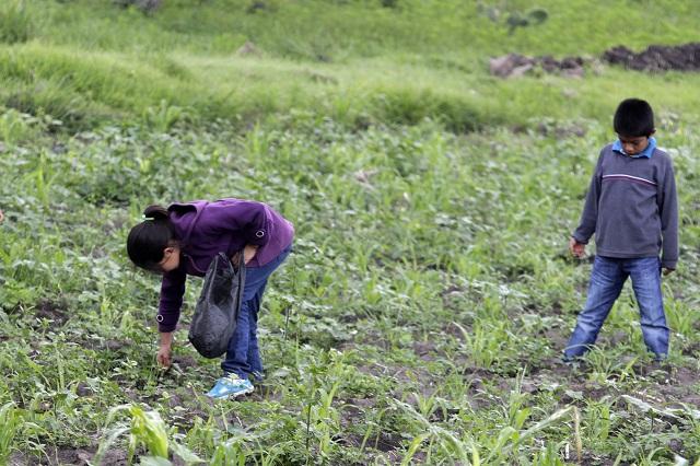 En labores del campo, mayoría de niños que trabajan: Inegi