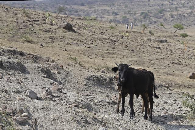 Afecta sequía a 69% del territorio poblano