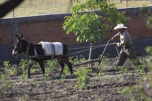 Agricultura, electricidad y minería, giros sin auge en Puebla: Inegi