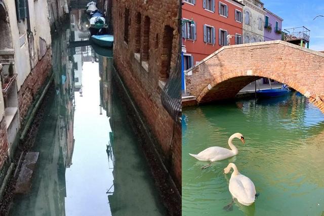 Transparentes y limpios, así lucen los canales de Venecia debido a la ausencia de turistas