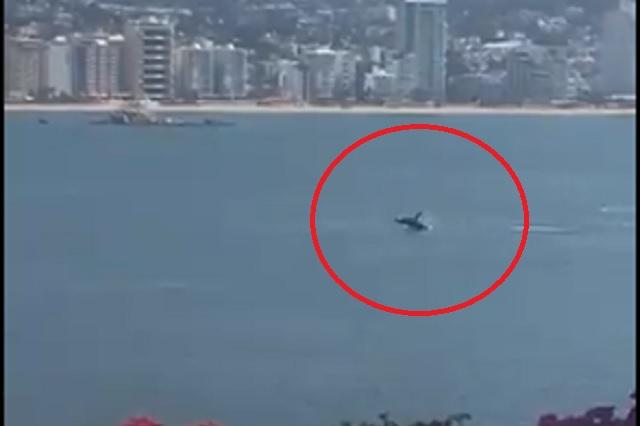 Captan ballena en playas de Acapulco durante cuarentena: Video