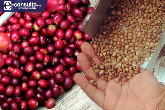 Destaca la Sierra Negra por producción de café a nivel nacional