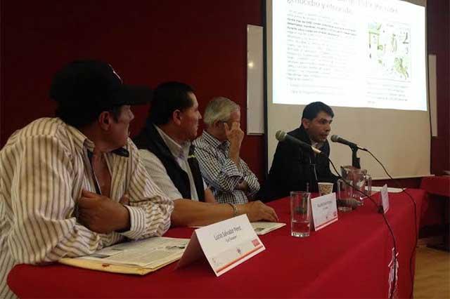 Denuncian daños al agro por cementera en Palmar de Bravo