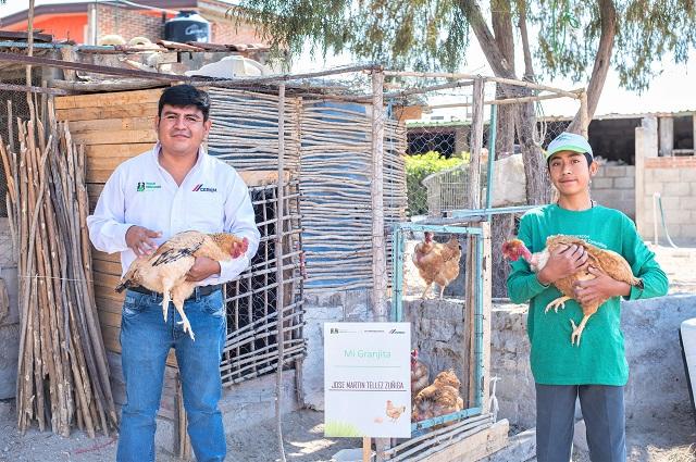 Gallinas ponedoras brindan alimento a familias de Cuautinchán