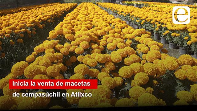 Inicia la venta de macetas de cempasúchil en Atlixco