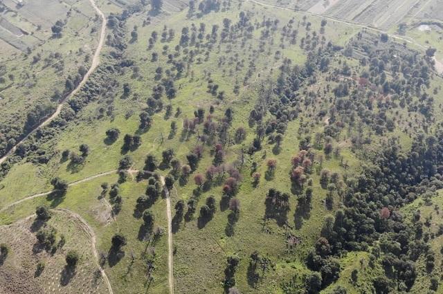 Detecta Conafor 111 casos de mal uso de recursos en Puebla
