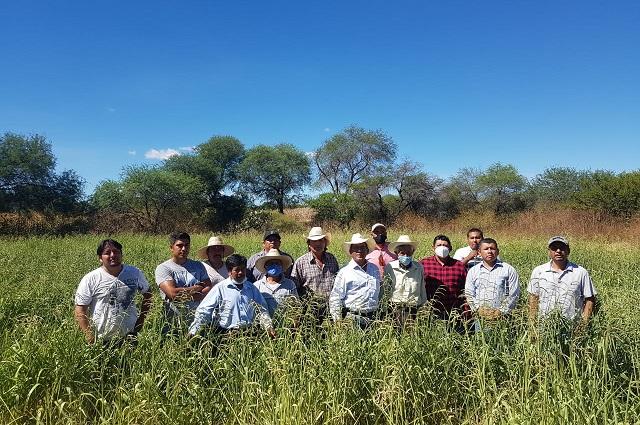 Impulsan mejoramiento ganadero en la Mixteca Poblana