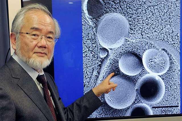 Gana el científico japonés Yoshinori Oshumi el Nobel de Medicina