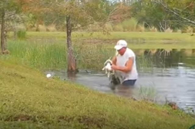 Video: Hombre rescata a su perro de fauces de pequeño cocodrilo