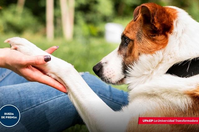 Las mascotas también sufren por el desapego de las personas