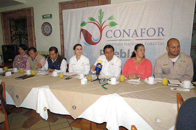 Conafor Puebla apoya  a productores de árboles de navidad