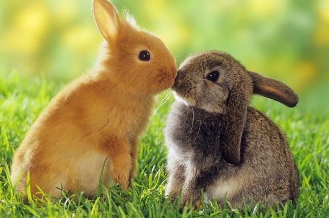 En Polonia, gobierno recomienda a ciudadanos reproducirse como conejos