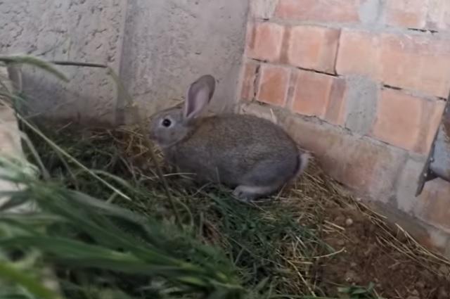 Foto / Captura de pantalla de YouTube