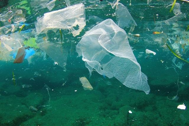 Estos contaminantes afectan y dañan al Golfo de México