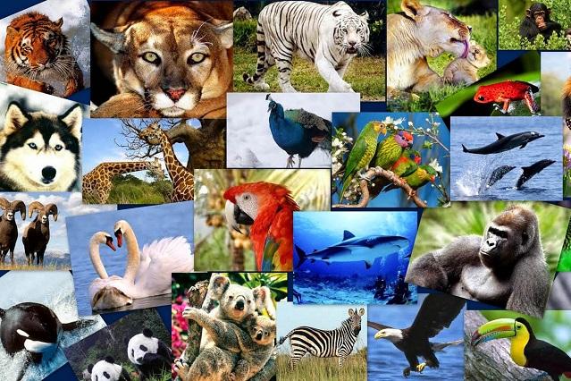 Un millón de especies en peligro de extinción por contaminantes