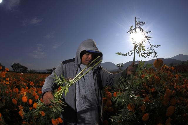 Pegan al campo poblano corto presupuesto y delincuencia