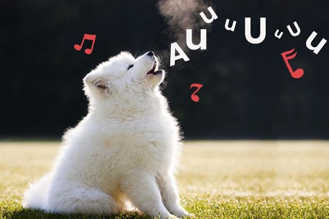 Rock y reggae, géneros favoritos de perros, revela la Sociedad Protectora de Escocia