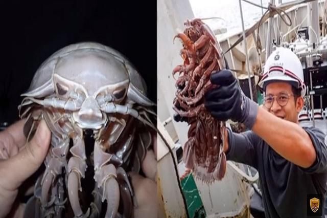 Descubren cucaracha gigante en la profundidad del mar