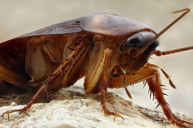 Una cucaracha pasó 9 días en el oído de una mujer