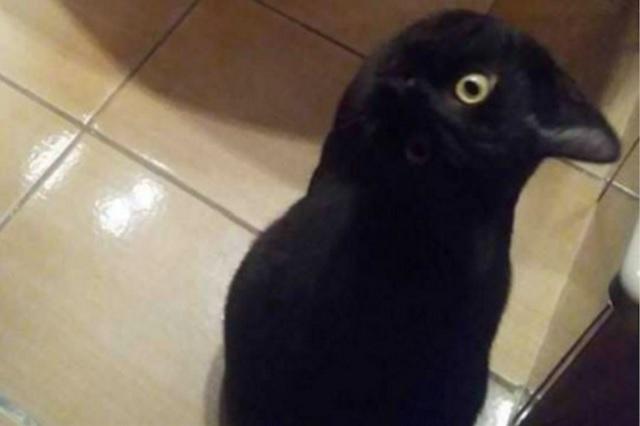 La foto de este cuervo se ha vuelto viral, pero ¿por qué?